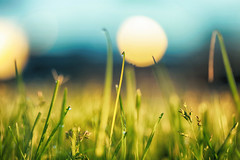 Start Fresh (flashfix) Tags: june072017 2017inphotos ottawa ontario canada canon canoneos5dmarkii 5dmarkii bokeh nature mothernature 100mm macro grass shine dew morning sunshine light sunlight flashfix flashfixphotography