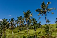 IMG_0640 (Ela&Piotr) Tags: bali indonesia indonezja jatiluwih ricefields