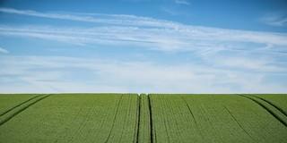 Ryefield lines...