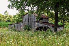 Nelson County KY. barn (robgividenonyx) Tags: kentucky nelsoncounty barn rural ruraldecay abandoned