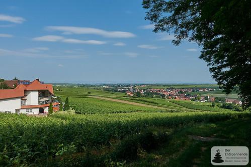 Ausblick von Neuleiningen auf Rheinebene