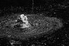 So refreshing (grundi1) Tags: sony alpha 68 ilca japanmakaken landskron kärnten carinthia sigma 1770 f2845 dc macro schwarzweis scharz weis black white bw blackandwhite