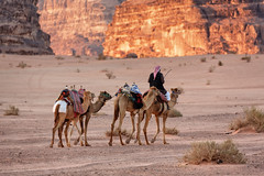 Wadi Rum sunrise (Vasilis Tsikkinis) Tags: jordan camel wadi rum wadirum ride sunrise desert
