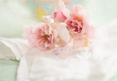 pretties (borealnz) Tags: roses pink cloth flowers sweetheart cecilebrunner romantic pretty