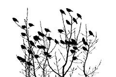 Flock Of Bohemians (_city_of_broken_dreams_) Tags: nikon nikond750 d750 300mm monochromatic monochrome bw noir blackandwhite noiretblanc minimalist minimalism minimal birds nature wildlife birding birdwatching silhouette contrast tree