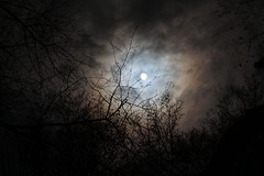 (sopo_chinchaladze) Tags: moon cloud clouds night moonlight light trees georgia canon 50mm moonshine