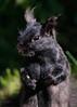 _53F7207 Grey Squirrel (~ Michaela Sagatova ~) Tags: canonphotography greysquirrel mammal michaelasagatova squirrel