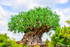 Tree of Life (disneylori) Tags: treeoflife animalkingdom waltdisneyworld disneyworld wdw disney