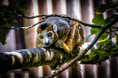 This is my tree (Tony_Brasier) Tags: hot fun lovely location canterbury kent zoo nikon 70300mm howletts hut hill holiday lazy d7200