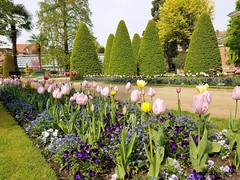 The Flowers From The North (Helenɑ) Tags: garden botanicalgarden leuven belgium flowerbed grass plant flower outdoor botanicalgardenkruidtuin tullips pensies flowers
