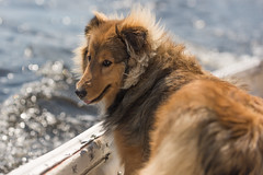 2017-04-16 Sailing at B.U. 010 (consolecadet) Tags: boston bostonuniversity cambridge charlesriver daily dogs lucythedog river sailing sports tufts watersports women womens