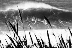 Huge Wave Surfing (Jop Hermans Photography) Tags: surfing surfer bigwave surf blackandwhite monochrome jophermans