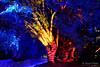 20170531-42-VIvid Light display at Sydney Botanic Gardens (Roger T Wong) Tags: 2017 australia nsw newsouthwales rogertwong sel2470z sony2470 sonya7ii sonyalpha7ii sonyfe2470mmf4zaosscarlzeissvariotessart sonyilce7m2 sydney sydneybotanicalgardens vivid festival illuminated lights night tree