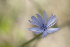 Flower dream (Manolo Calabuig) Tags: dof otw flower flor
