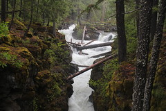 The upper Rogue River, as it pours into the gorge - Explored 6/13/17 (rozoneill) Tags: upper rogue river trail siskiyou national forest oregon hiking union creek crater lake park medford prospect gorge umpqua divide wilderness