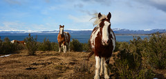 LOS SALVAJES DEL SUR (Marina Balasini & Juan Montiel) Tags: horse caballos trave turismo patagonia argentina