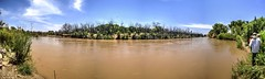 Burned area near Escondida NM (JoelDeluxe) Tags: riogrande mrg bosque water sediment river habitat restoration sites levees spring2017 flood nm newmexico joeldeluxe attributionusfws