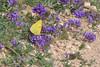 16052017-DSC_0213.jpg (stephan bc) Tags: vlinders bloem yecla