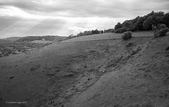 Grazing in the slope (I) [BW]/Pastando en la ladera (I) [BW] (Modesto Vega) Tags: nikon nikond600 d600 fullframe monochrome blackwhite bw blancoynegro noiretblanc schwarzundweiss monocromo northdowns colleyhill grazing surrey reigate landscape