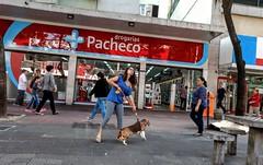 quem manda aqui? (luyunes) Tags: gente bicho cachorro cão obediência disciplina motoz luciayunes