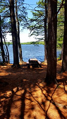 Picnic Time! (SurFeRGiRL30) Tags: franklinlakesnaturepreserve franklinlakesnj nj newjersey lake beautiful reservoir blueskies summer sun sunshine sunny gorgeous picnictable woods trees pineneedles