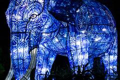 Determined elephant lighting up the night (Katisi) Tags: canoneos550d vivid2017 vivid sydney australia light night art dark blue animal lampion lantern huge giant big elephant determined stern strong tarongazoo black autofocus canon dreamy dreams imagination happy beatiful nsw newsouthwales