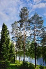 Lakeside trees (Jonne Naarala) Tags: finland fujix70 fujifilmx70 kotajärvi lake luminar pielavesi summercottage trees x70