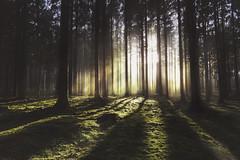 Buchholzer Wald 8 (digital_underground) Tags: forest wood tree green sun sunset germany
