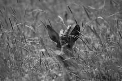I am not here either (stempel*) Tags: polska poland polen polonia gambezia pentax k30 bigma sigma nature kraśnicza wola