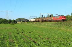 DB Cargo 1604 @ Herfte Aansluiting (Sicco Dierdorp) Tags: db dbc schenker cargo onnen kijfhoek serie1600 ketelwagen keteltrein herfte aansluiting meppel zwolle