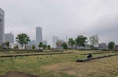 Yokohama, Japan (inefekt69) Tags: japan street asia city nikon d5500 日本 yokohama 横浜 rain