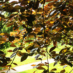 Sunpath thumbnail