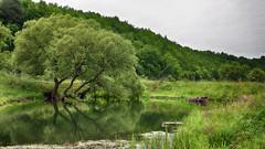 Backwater (Unicorn.mod) Tags: 2017 colors summer river water backwater tree trees landsape june samyang35mmf14asumc samyangmf35mmf14edasumcae samyang outdoor manual manuallens