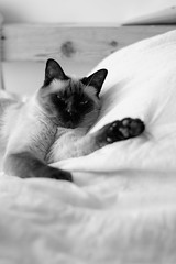 Me lazy? (Ojo de Piedra) Tags: mexico xseries portrait fuzito xt10 blackwhite home family fujifilm cats felinos mex