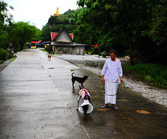 ,, Nurse Nun Walking Miss Legs ,, (Jon in Thailand) Tags: jungle buddha nun nursenun misslegs maddog pumpkintherascal dog dogs k9 k9s red yellow blue cone dogcone dogleash street streetphotography streetphotographyjunglestyle littlestubby malemonkey trees concreteroad dogpajamas ake littledoglaughedstories