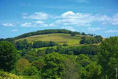 England (Allan Jones Photographer) Tags: england green landscape englishcountryside nature trees fields cows cattle beauty uk devon allanjonesphotographer canon5d3 canonef24105mmf4lisiiusm vista summer