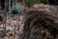 Misc. Outdoors-53.jpg (Drew Rampley) Tags: rough winter woods bale dark hay old sticks straw worn