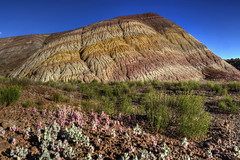 Painted Chinle Desert with wildflowers (Chief Bwana) Tags: az arizona chinle chinleformation wildflowers pariaplateau vermilioncliffs houserockvalley mudstone painteddesert psa104
