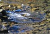 2-Detalles de invierno con 700 mm en Calgary,Alberta ,Canadá (Cimarrón Mayor 14,000.000. VISITAS GRACIAS) Tags: ef500mmf4lisusm14x ƒ71 7000mm 15000 500 flashapagado winter ice water invierno hielo agua inverno ghiaccio acqua hiver glace eau eis wasser cimarrónmayor panta josémiguelpantaleón 7dmarkii canoneos7dmarkii canon7dmarkii naturaleza libertee telefoto700mm dominicano