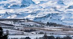 Winter Landscape (maytag97) Tags: maytag97 nikon d750 tamron 150 600 150600 landscape winter snow idaho mountainside hill rural row