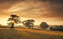 Dreamy Poppies (Captain Nikon) Tags: shadows dreamy poppies poppy sunrise leicestershire trees silhouettes rural farmland atmospheric summer goldensky nikond7000 srbgraduated06softgradfilter nikon18105mm