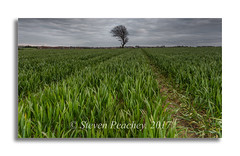 Just a field with a tree in it (Steven Peachey) Tags: canon sky clouds tree field farmland exposure landscape canon6d ef1740mmf4l stevenpeachey lightroom leefilters lee09gnd manfrotto