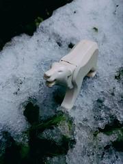 Snow (andresignatius) Tags: