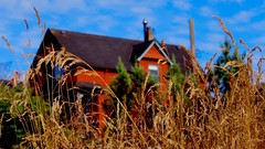 Red House (Steve Burgess1) Tags: vancouver red house grain grass wheat redhouse