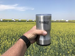 IMG_1608 (AgWired) Tags: bayer cropscience showcase plot tour 2017 soybeans canola wheat cereals corn north dakota agwired zimmcomm new media chuck zimmerman