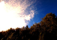 Stopped to look (thomasgorman1) Tags: clouds dark colors canon lanai hawaii trees forest