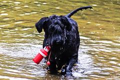 Bodo (Rolf Piepenbring) Tags: krefeld elfrathersee hund dog