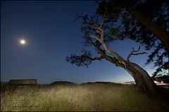De Courcy Island 022 BC web (DAMON WEST www.damonwestphotography.com) Tags: gulfislands island moon landscape nightscene