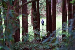 Going to class (trungtran01) Tags: uc santa cruz redwoods campus student trail trees tree