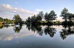 IMG_20170524_194740 (bananarama87) Tags: uk london northolt huawei nexus 6p phone photography reflections birds lake water swan light